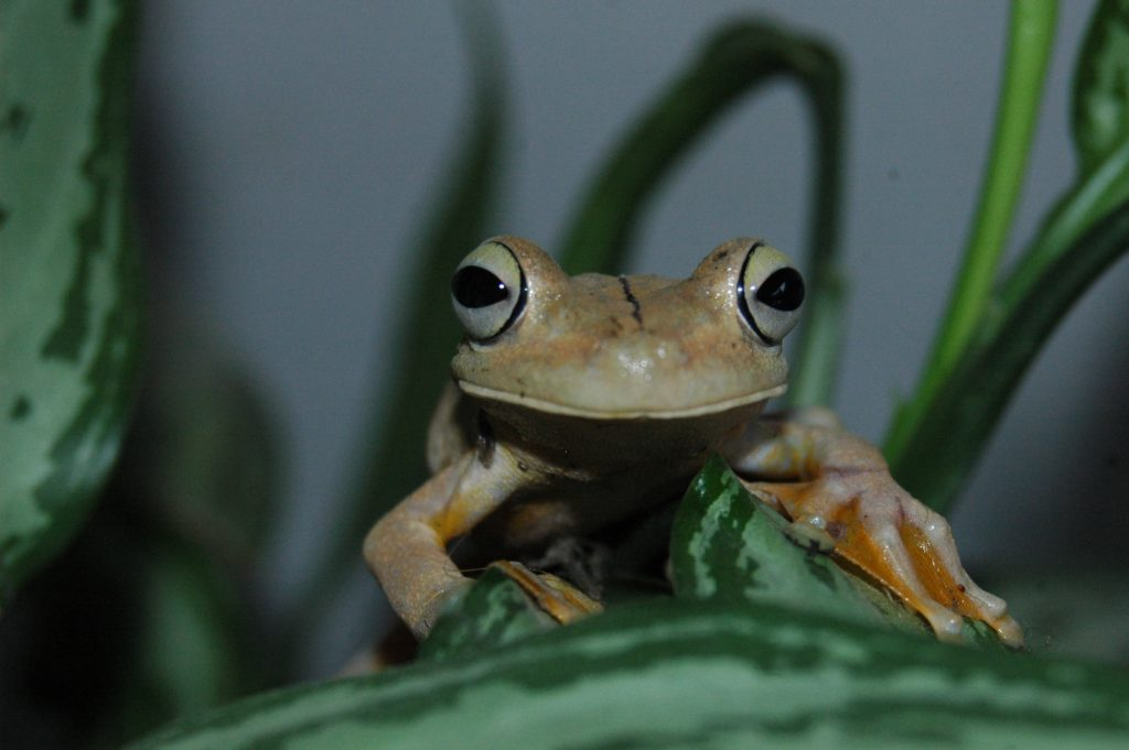 Amphibious & Reptiles at Night Tour